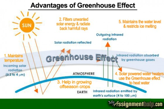disadvantages of green house The obvious reason to grow greenhouse vegetables, flowers, and herbs is to have crops at a time of year when they can't be grown outdoors out-of-season tomatoes, cucumbers, peppers, eggplant, lettuce, basil, and other vegetables command high prices in some markets.