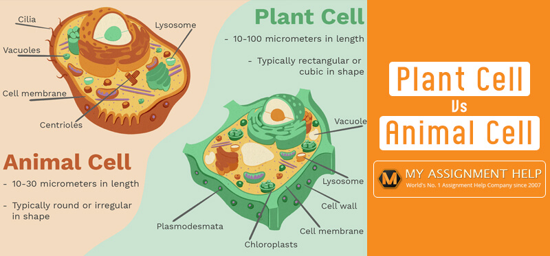 Essential Differences Between Animal And Plant Cells Manual Guide