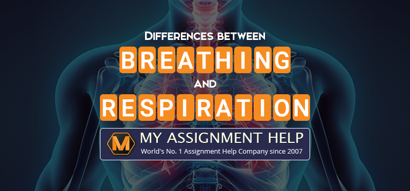 Differences Between Breathing And Respiration